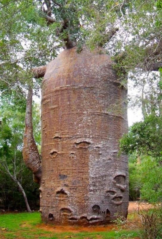 Потрясающие деревья нашей планеты