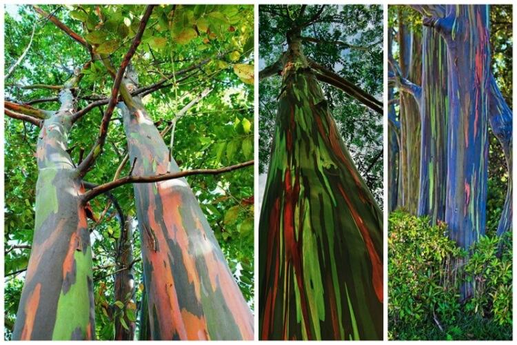 Самые отрясающие деревья нашей планеты